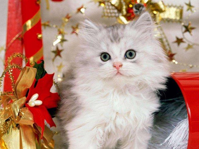 022 Vánoční pohledy pohlednice Christmas