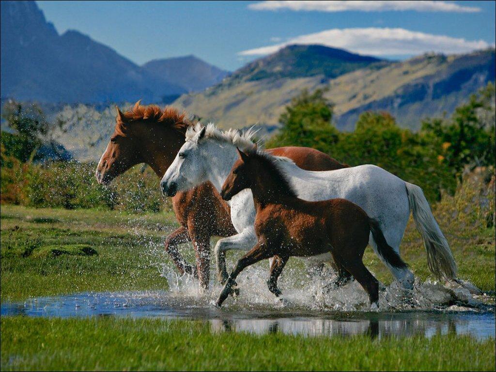 022 koně zvířata