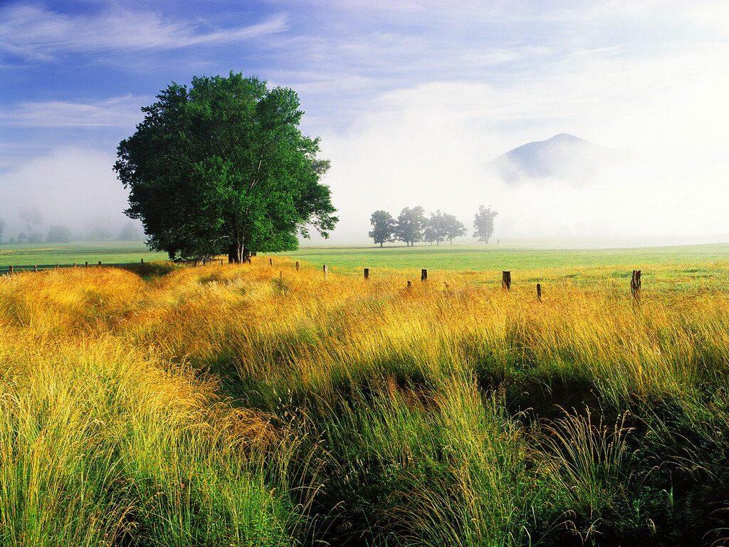 022 krajina - příroda - strom v poli - nature