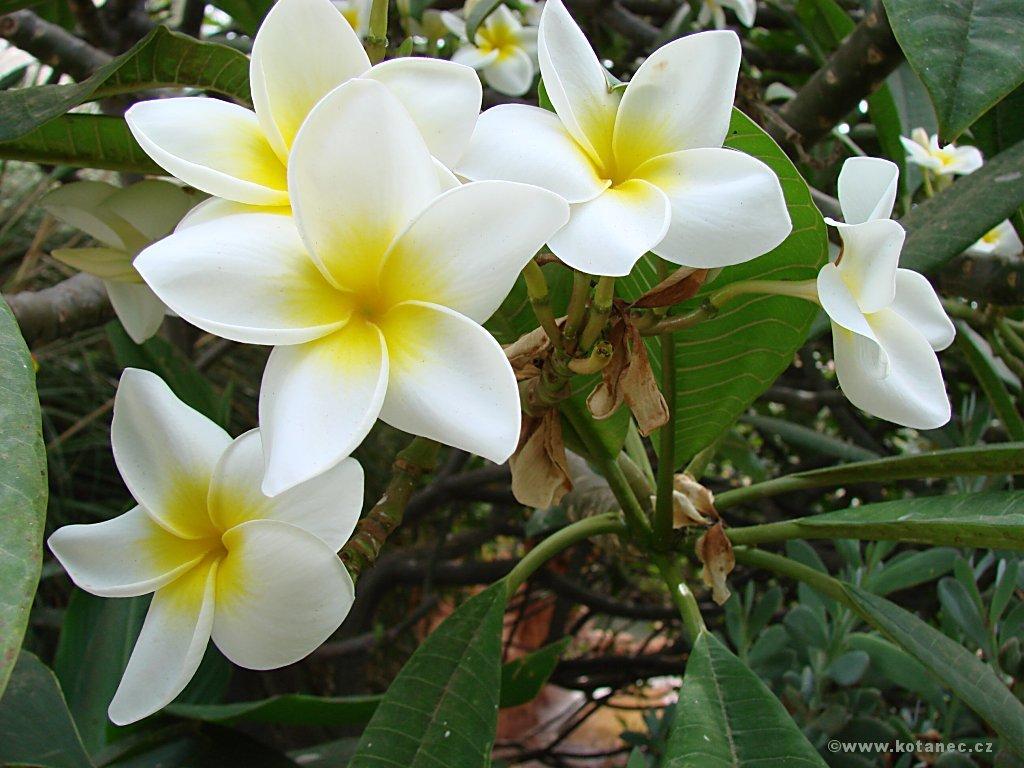 022 květiny flowers