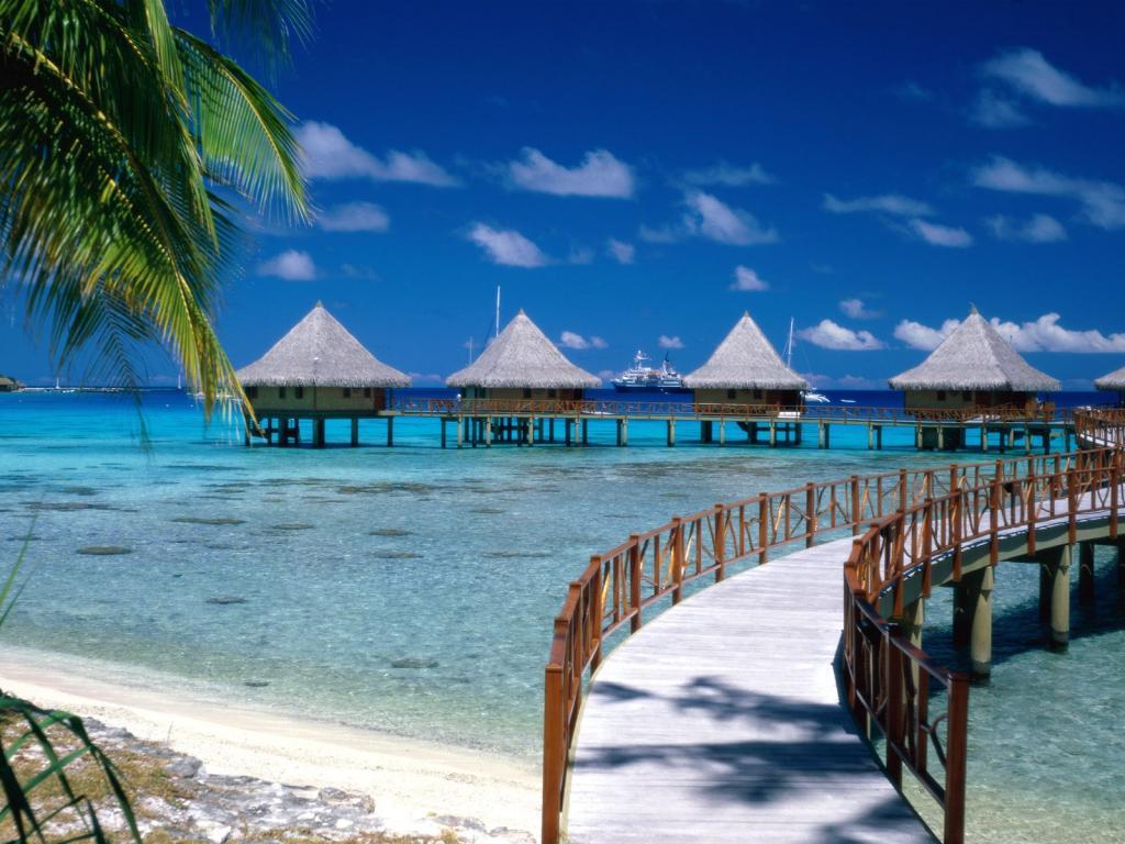 022 moře pláž palmy