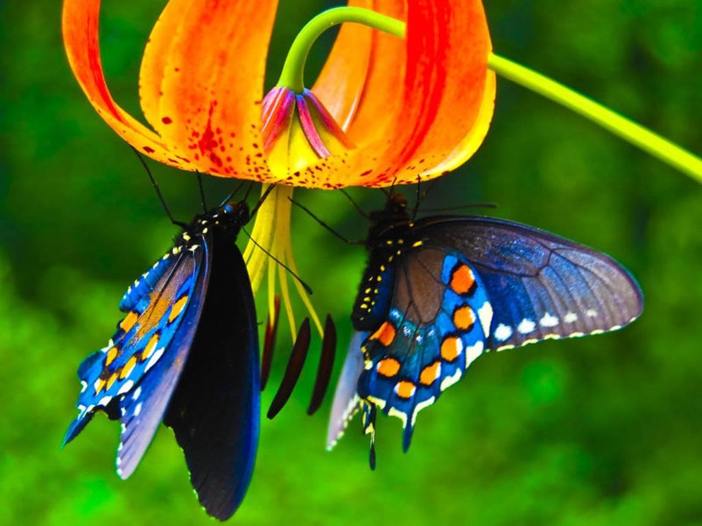 022 motýli - butterfly