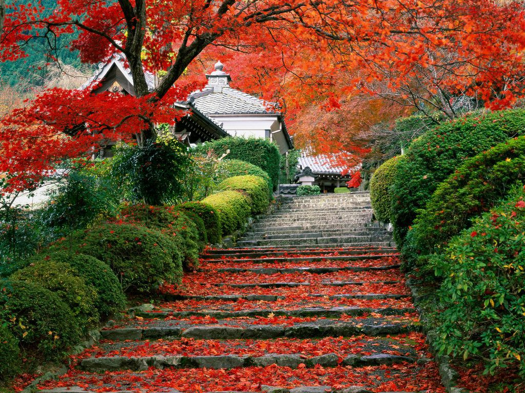 022 parky zahrady květiny