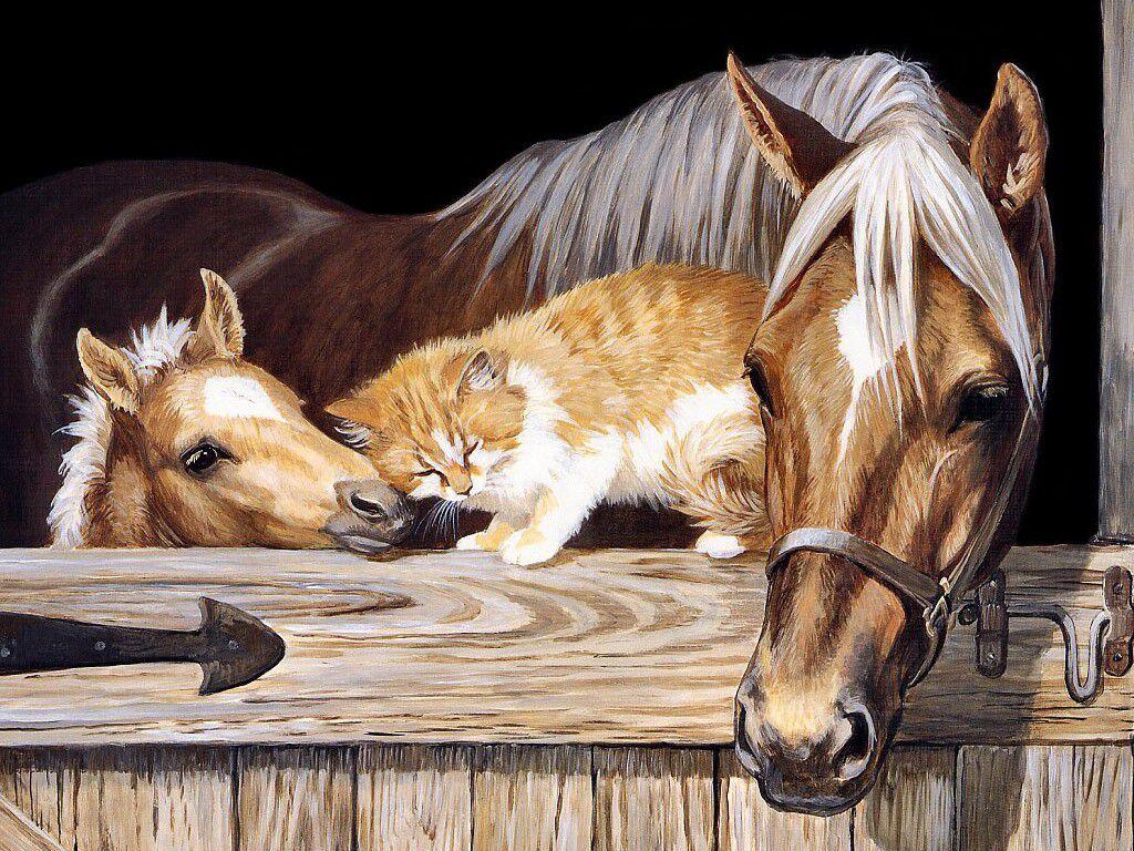 023 koně zvířata