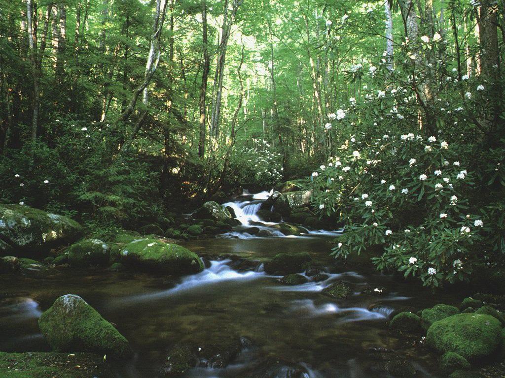 023 krajina - příroda - lesní potok - nature