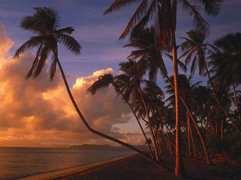 023 moře pláž palmy