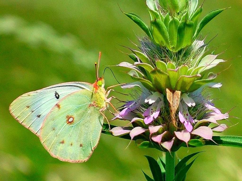 023 motýli - butterfly