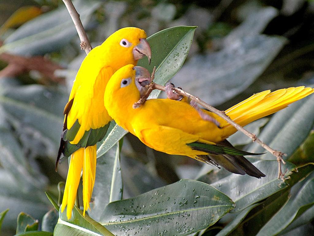 023 ptáci - papoušci - birds - parrots