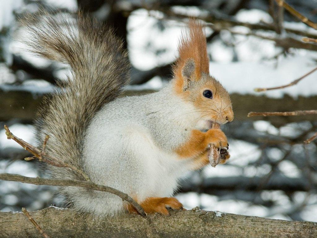 024 - veverky - zvířata