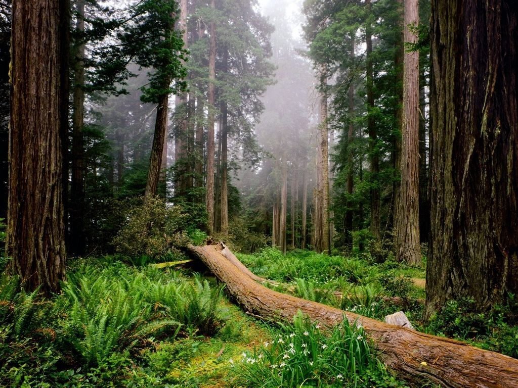 024 krajina - příroda - les - kmen stromu - nature