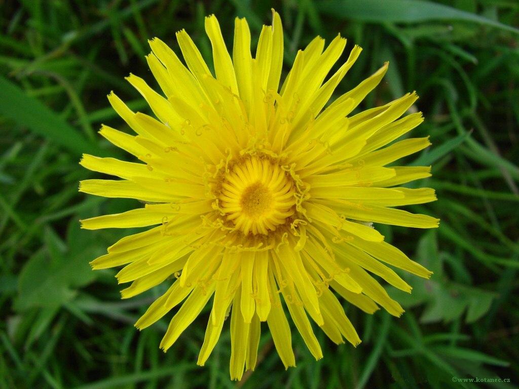004 kytky kytičky flowers