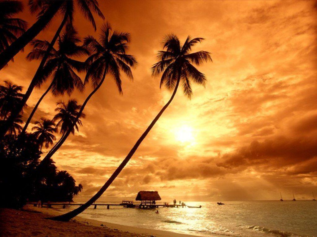 024 moře pláž palmy