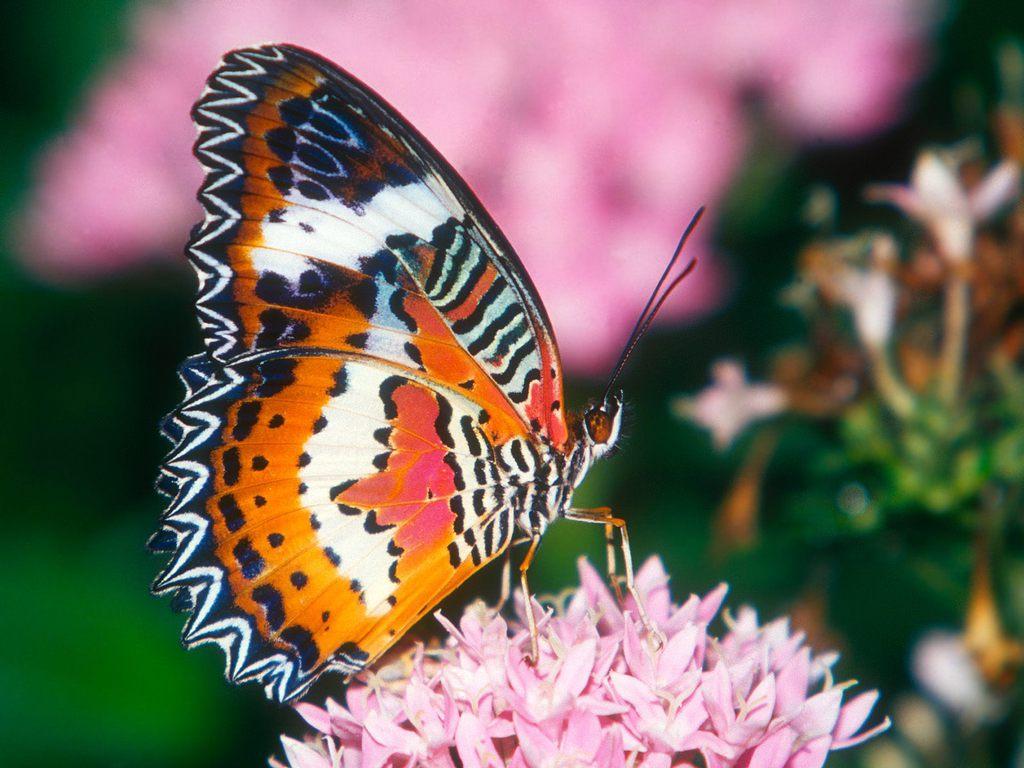 024 motýli - butterfly