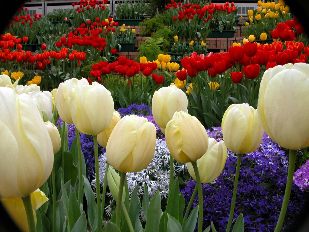024 parky zahrady květiny