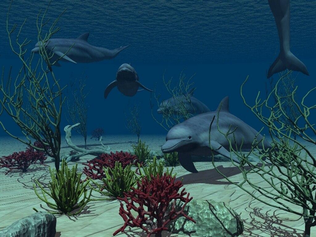 024 ryby - delfíni
