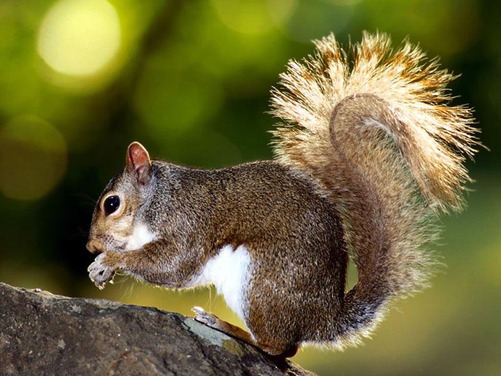 025 - veverky - zvířata