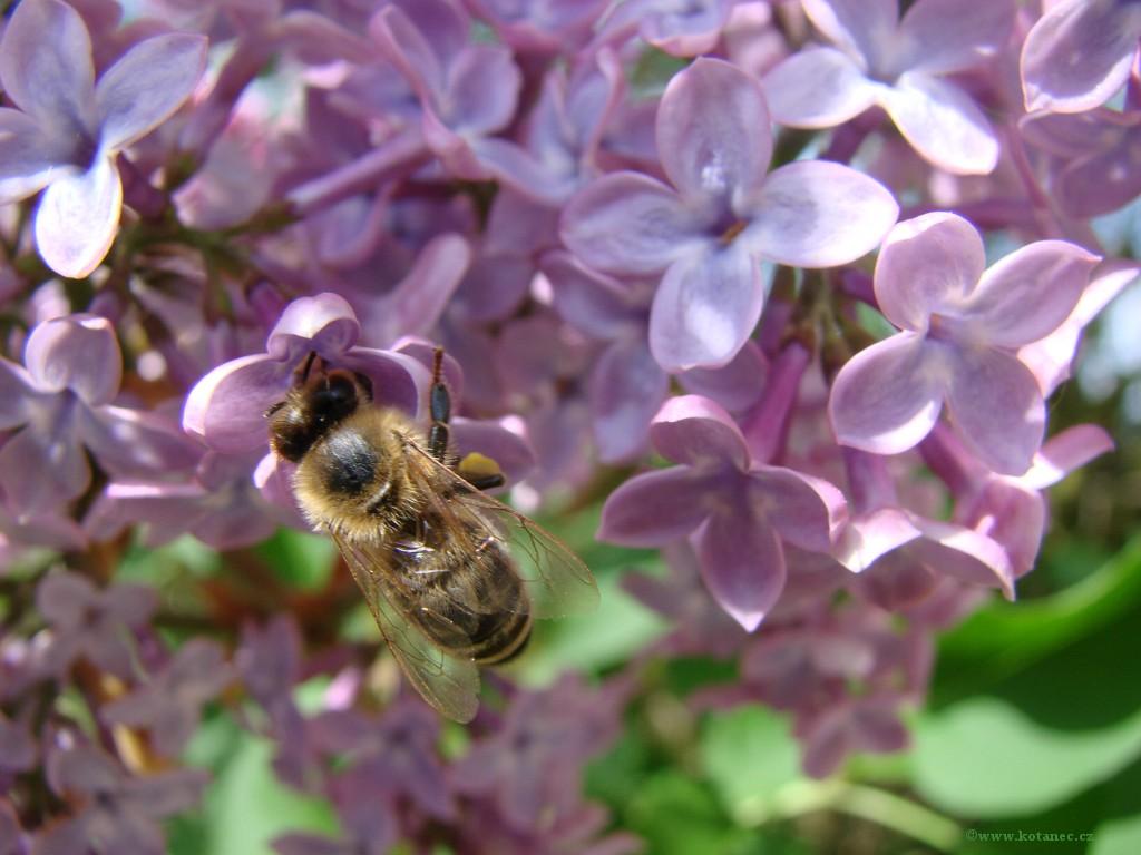 005 kytky kytičky flowers