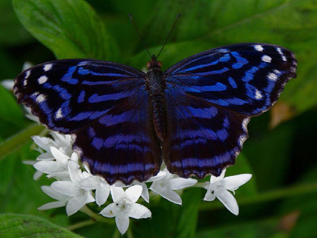 025 motýli - butterfly