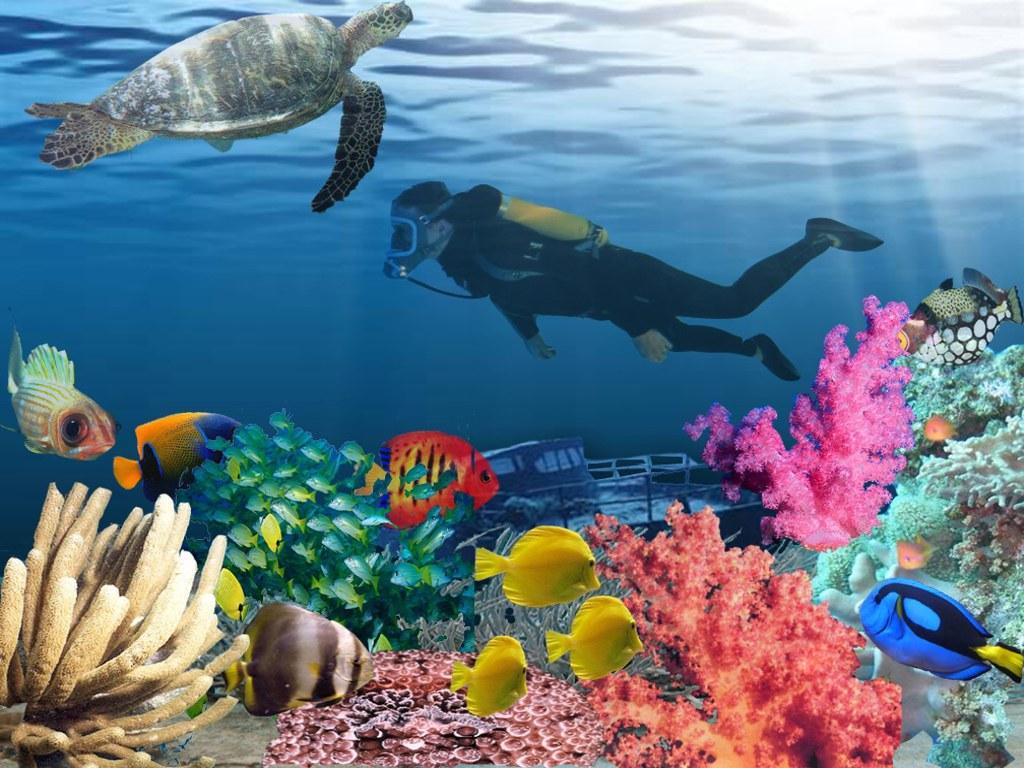 025 ryby - mořská želva