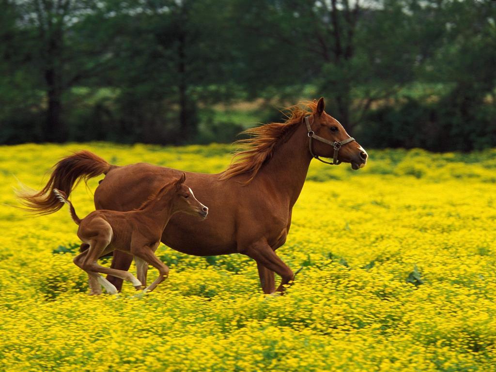026 koně zvířata horses