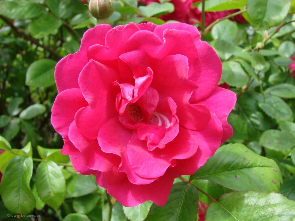 006 kytky kytičky flowers