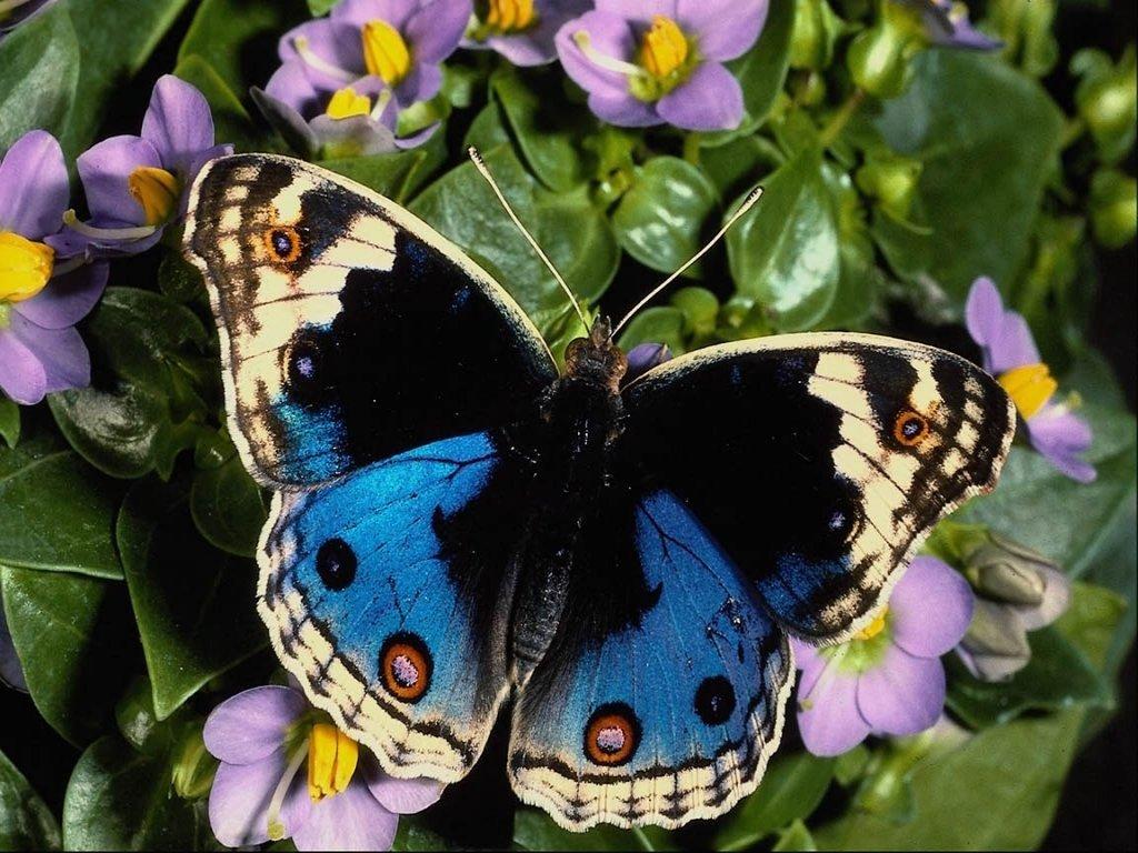 026 motýli - butterfly