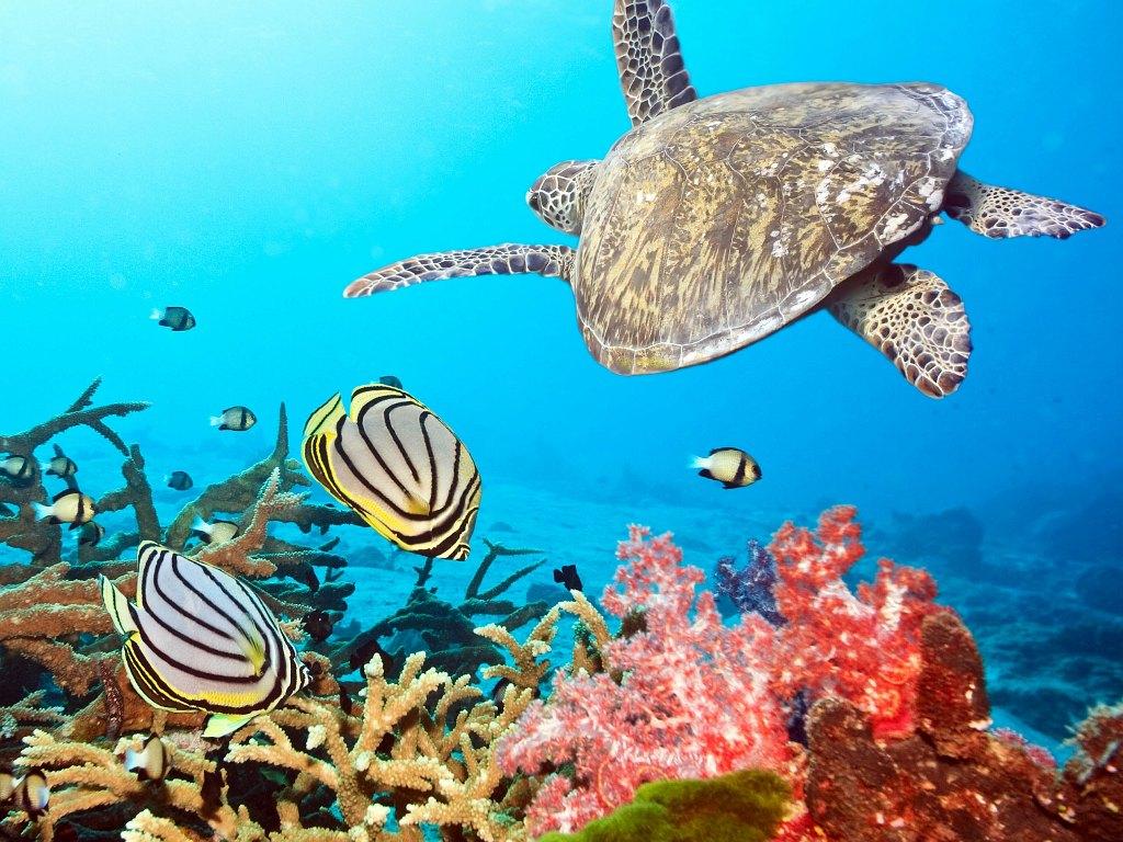 026 ryby - mořská želva