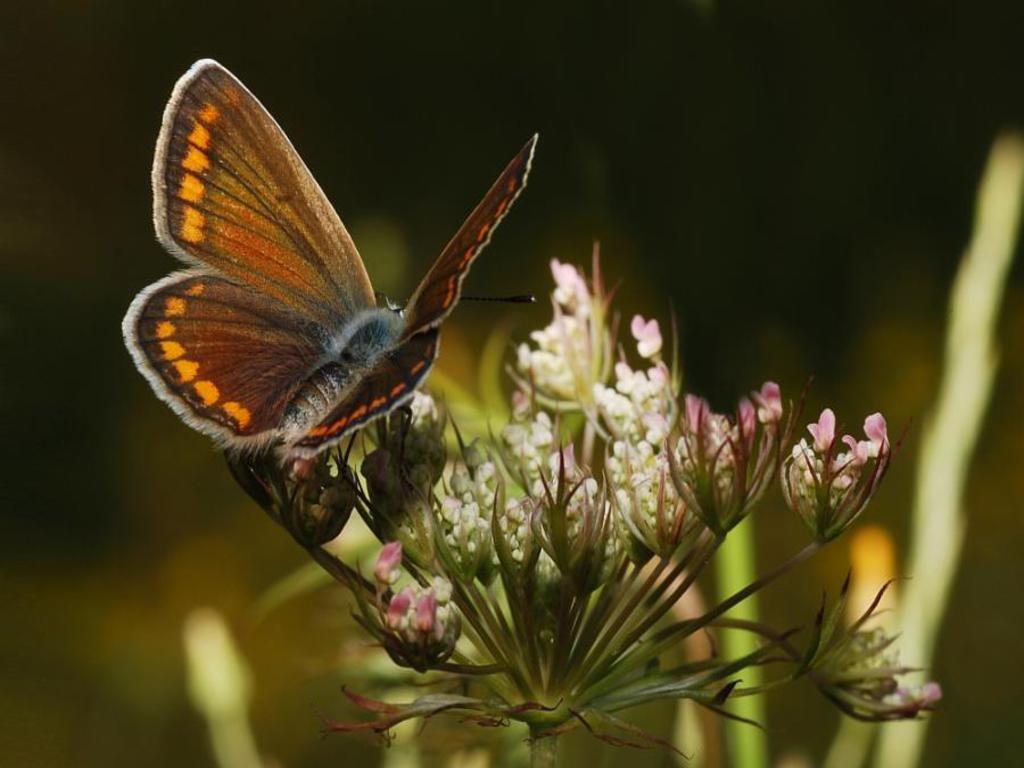 027 motýli - butterfly