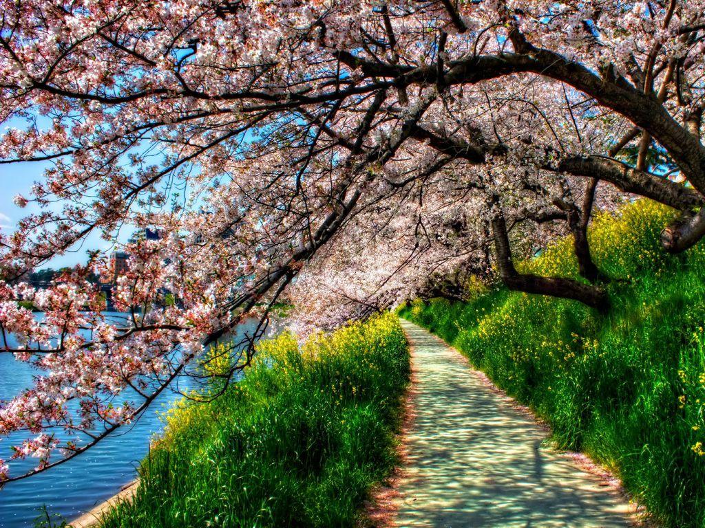 027 parky zahrady květiny