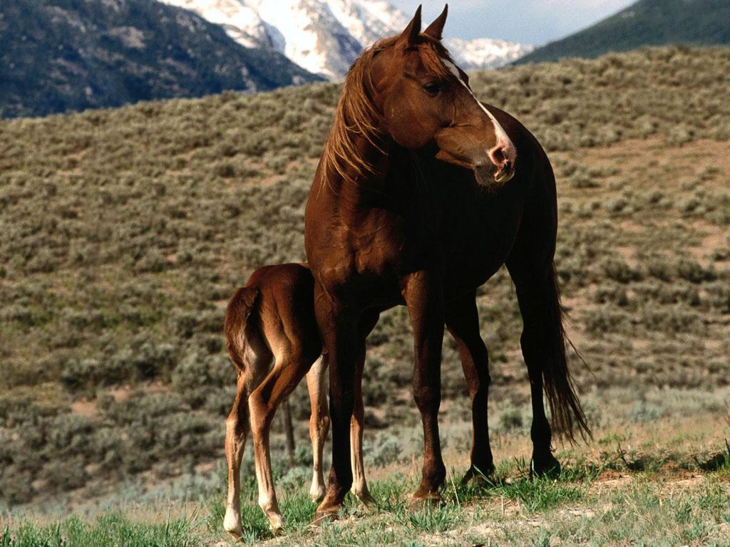 028 koně zvířata horses animals