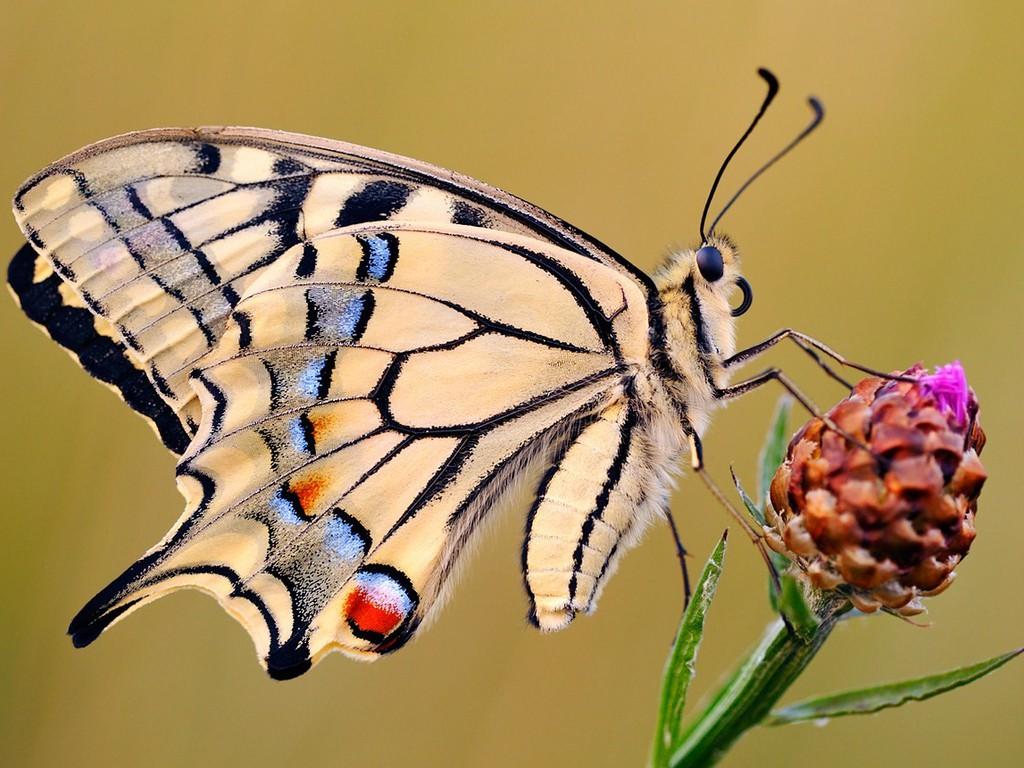 028 motýli - butterfly