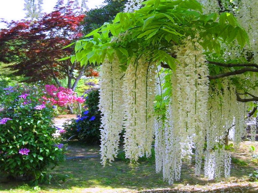 028 parky zahrady květiny