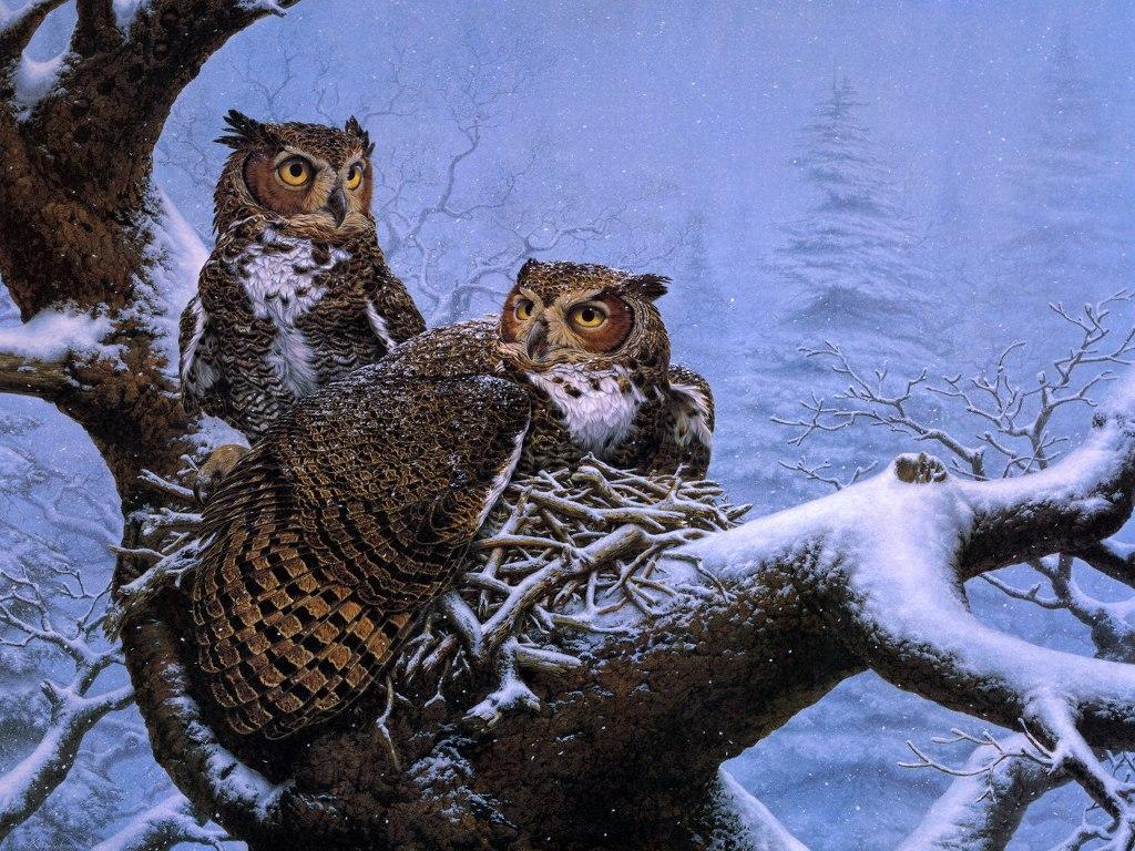 028 ptáci - sova - birds - owl