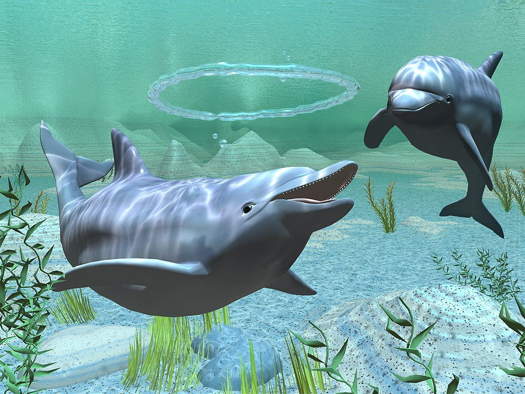028 ryby - delfíni