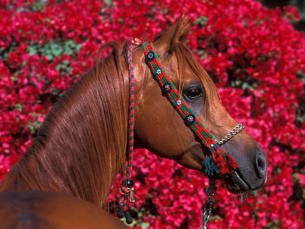 029 koně zvířata horses animals