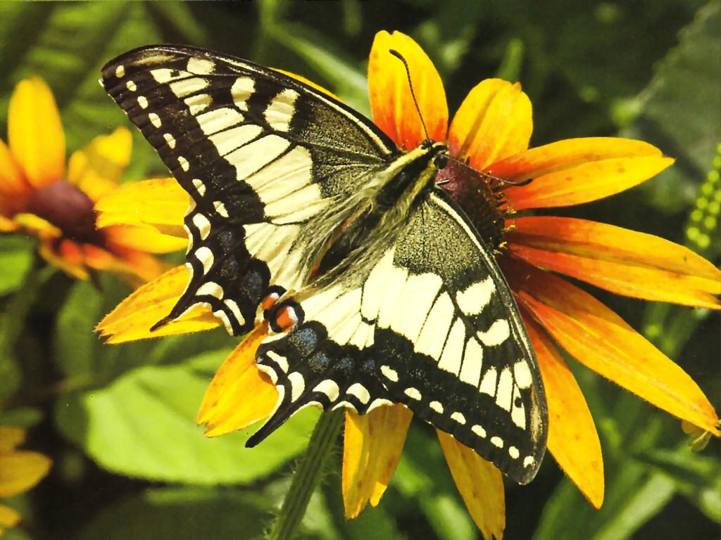 029 motýli - butterfly