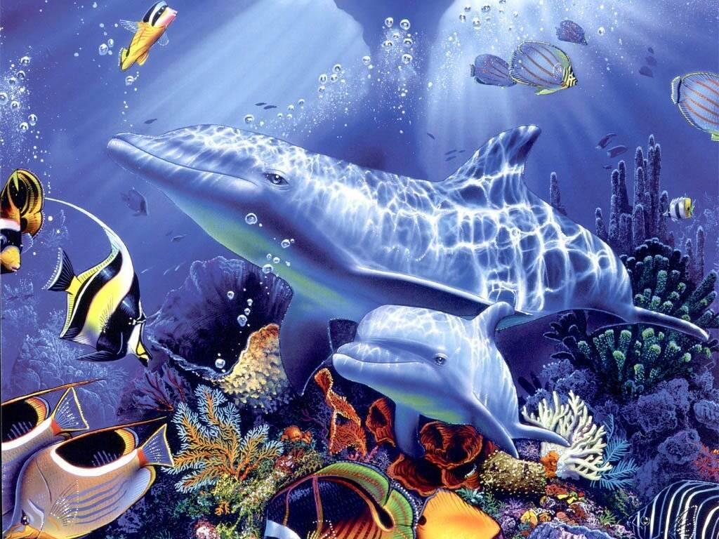 029 ryby - delfíni