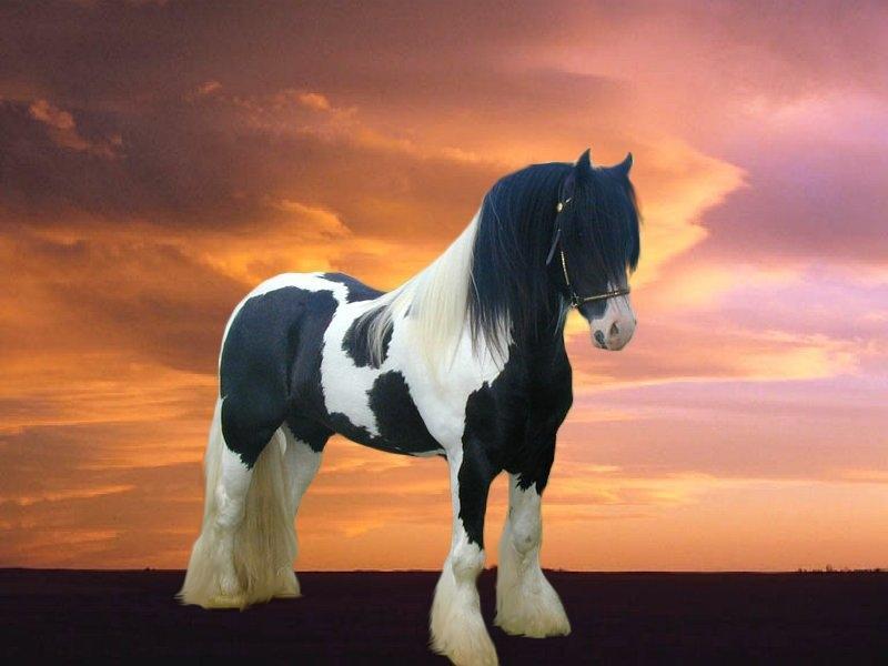 030 koně zvířata horses animals