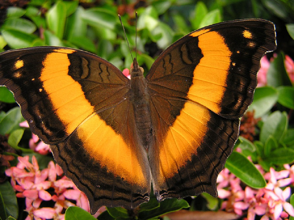 030 motýli - butterfly