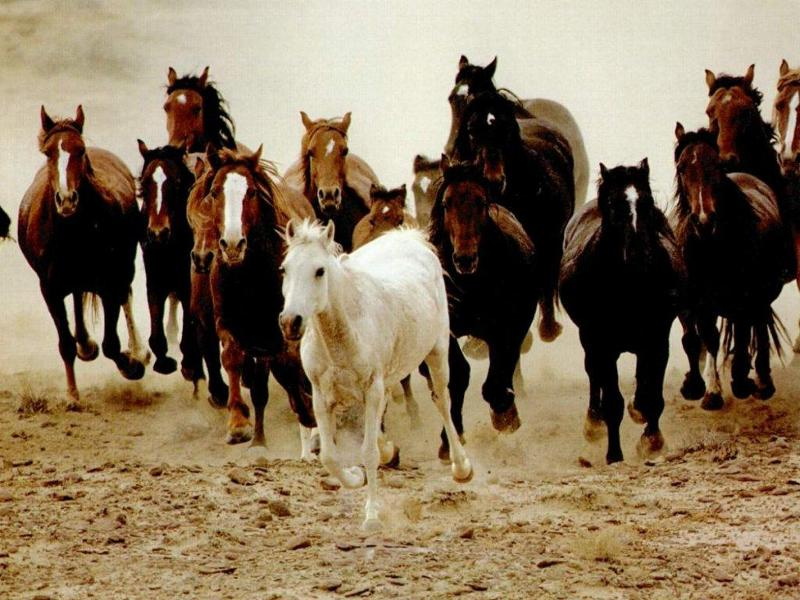 031 koně zvířata horses animals