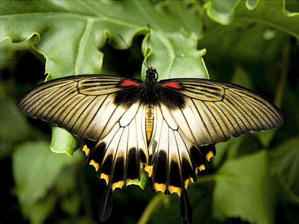 031 motýli - butterfly