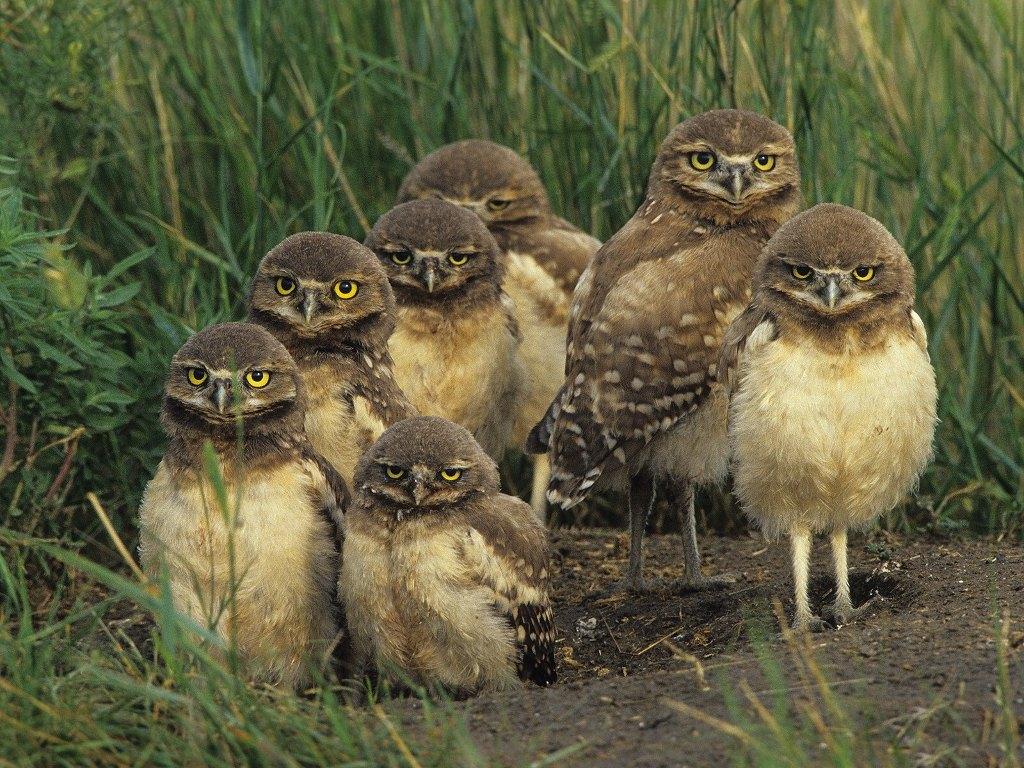031 ptáci - sova - birds - owl