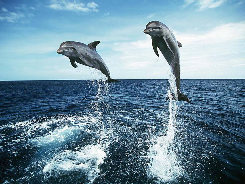 031 ryby - delfíni