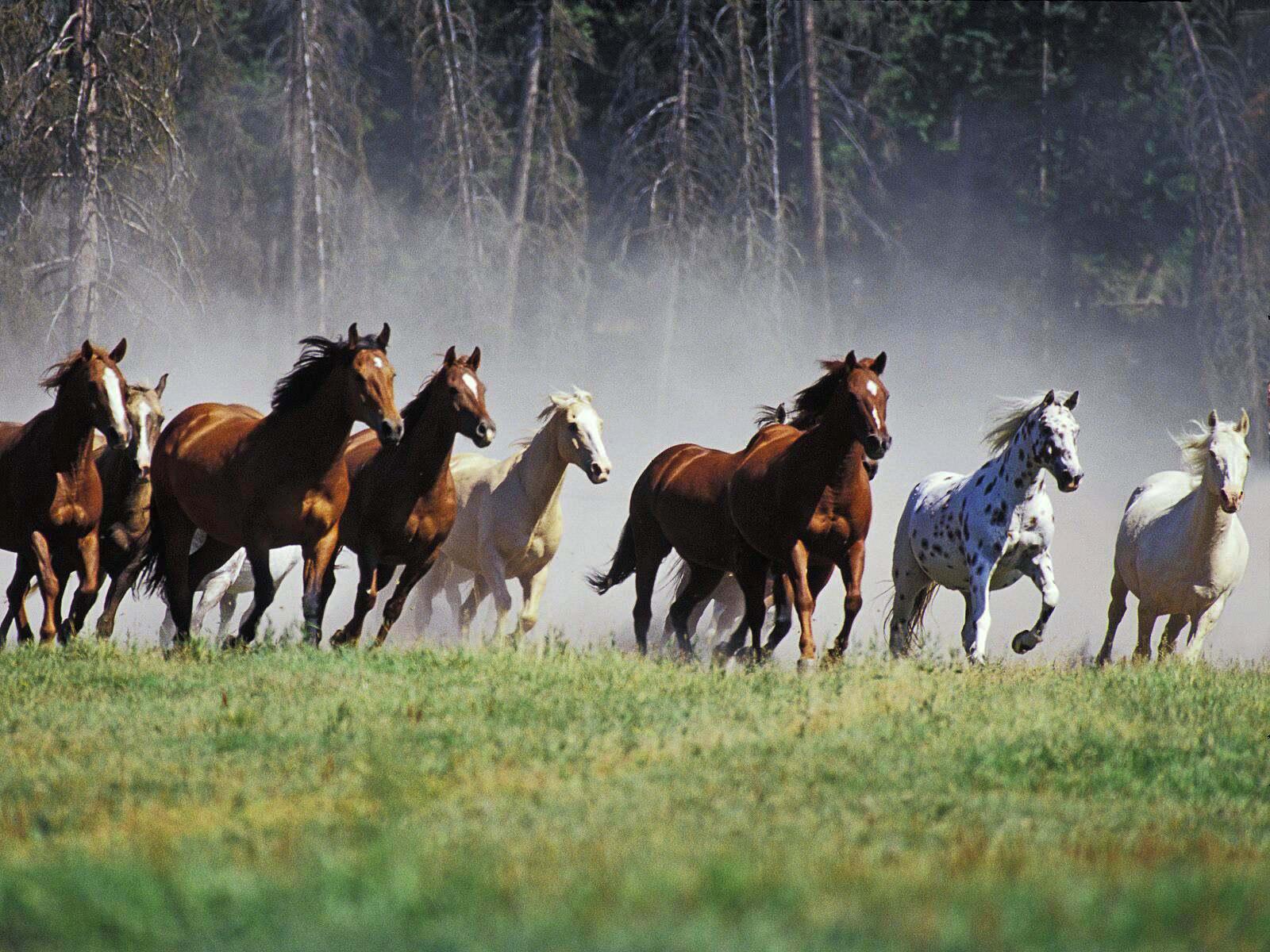 032 koně zvířata horses animals