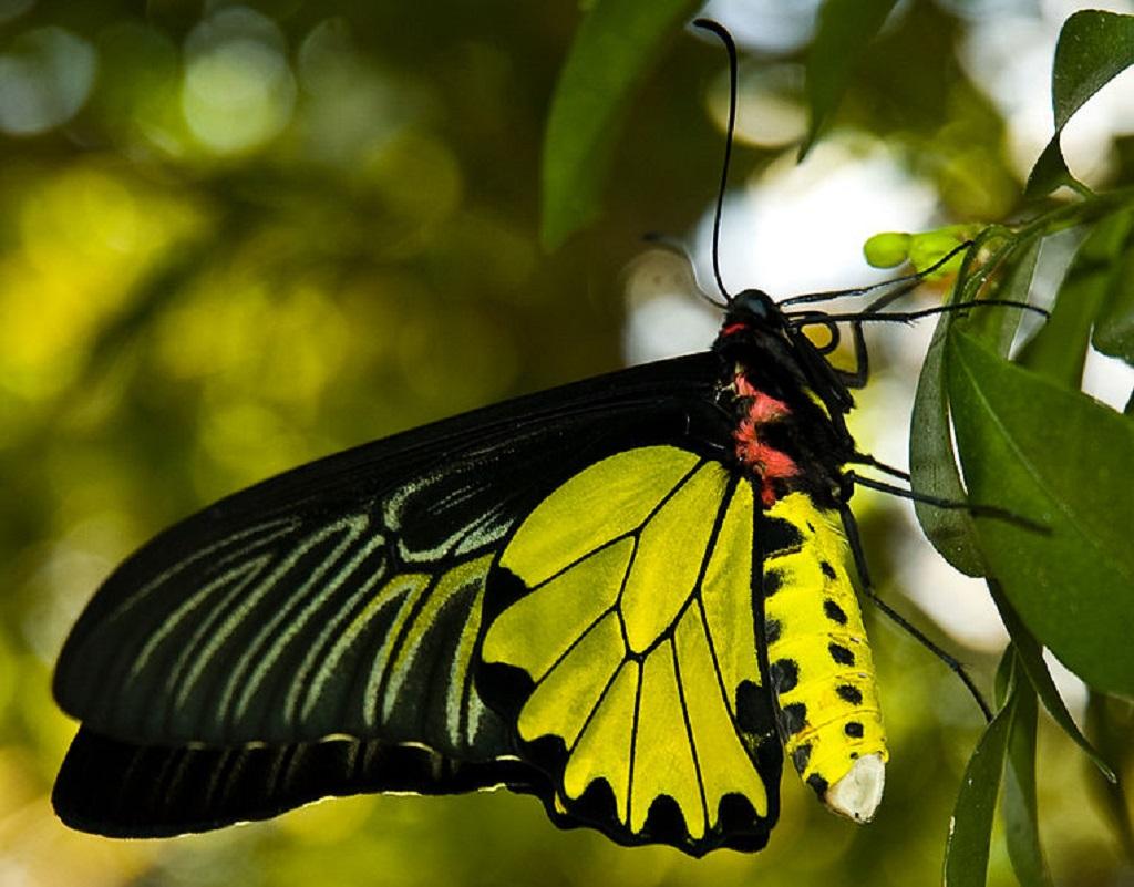 032 motýli - butterfly