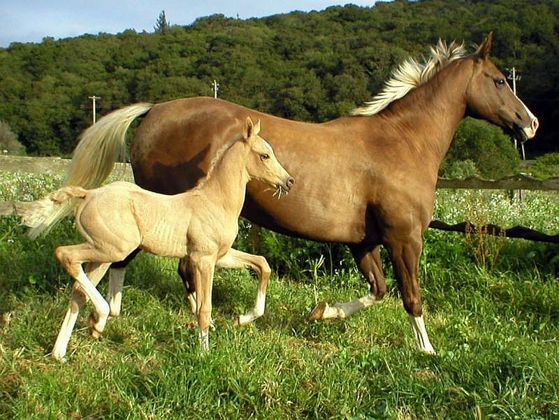 034 koně zvířata horses animals