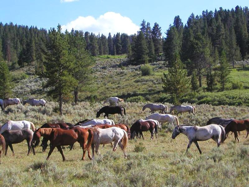 035 koně zvířata horses animals