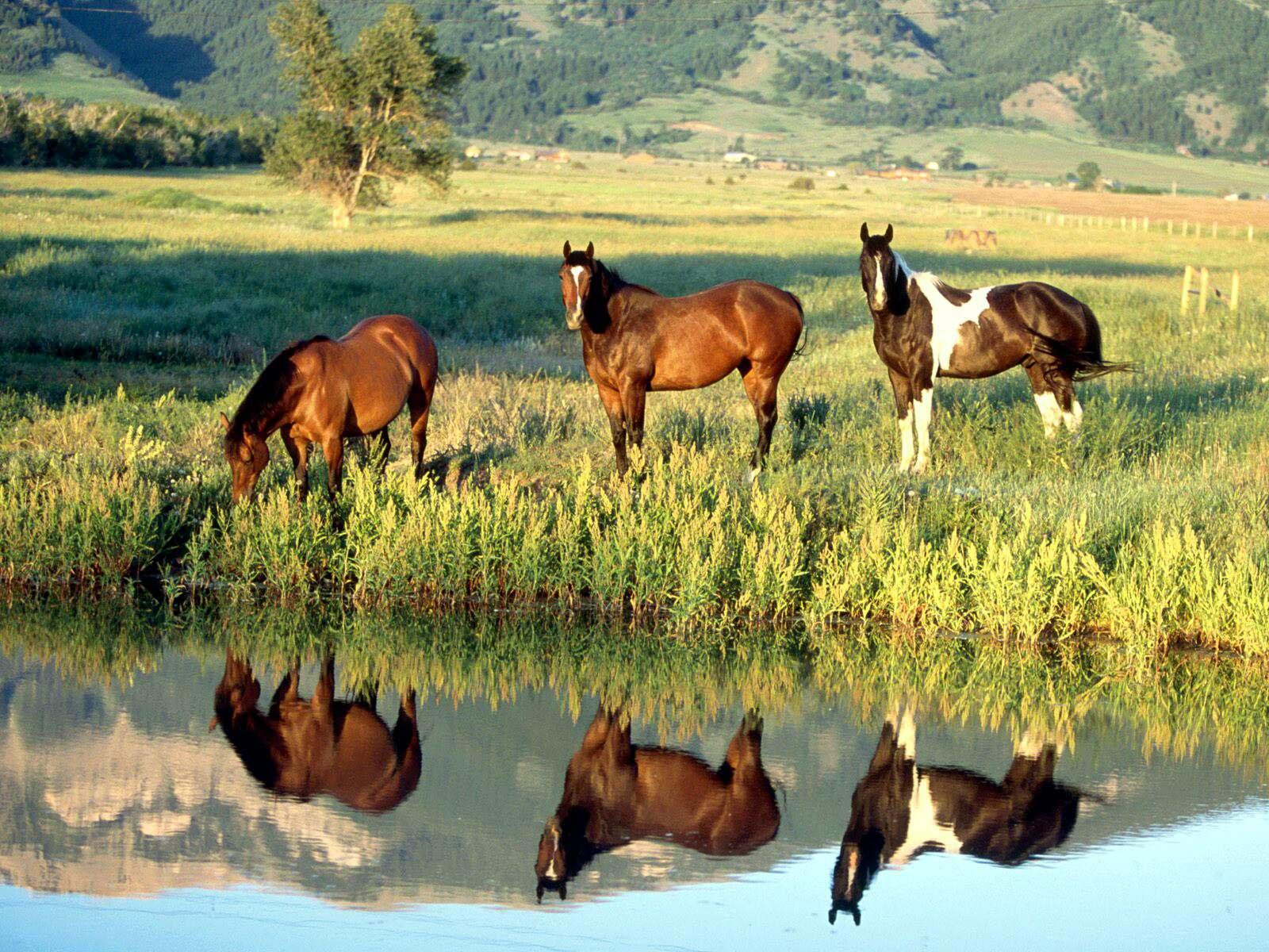 036 koně zvířata horses animals