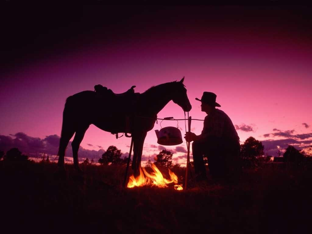 037 koně zvířata horses animals