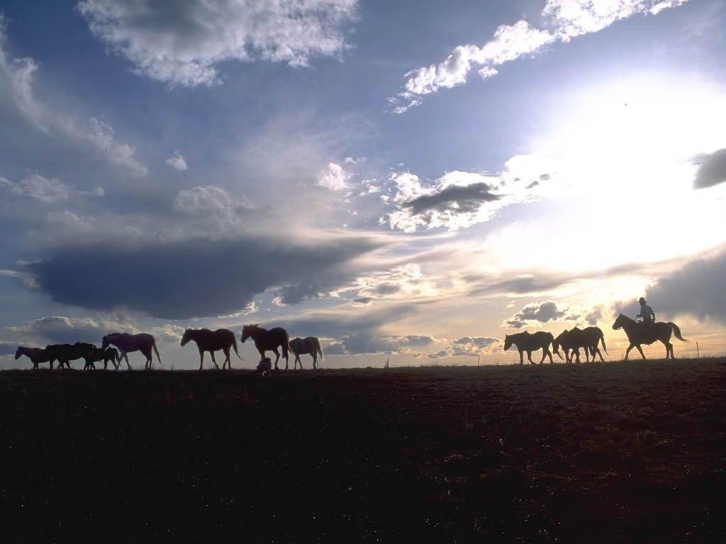 038 koně zvířata horses animals